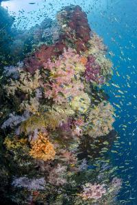 Indonesia, West Papua, Raja Ampat. Coral Reef and Fish by Jaynes Gallery