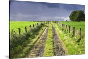 Ireland. Dirt road in County Roscommon by Jaynes Gallery