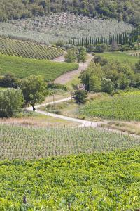 Italy, Radda. Vineyards and Olive Groves by Jaynes Gallery
