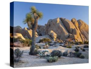 Joshua Tree and Boulder Formation, Joshua Tree NP, California, USA by Jaynes Gallery
