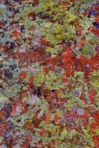 Lichen on Red Rock Formations Near Flagstaff, Arizona by Jaynes Gallery