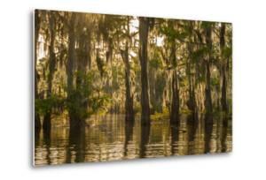 Louisiana, Atchafalaya Basin. Cypress Trees Reflect in Swamp by Jaynes Gallery