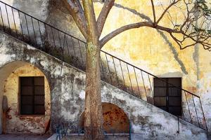 Mexico, Queretaro. Tree and weathered stairway. by Jaynes Gallery