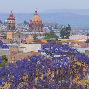 Mexico, San Miguel De Allende. Jacaranda Tree and City Overview by Jaynes Gallery