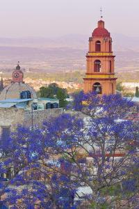 Mexico, San Miguel De Allende. Jacaranda Tree and City Overview by Jaynes Gallery