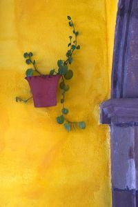 Mexico, San Miguel De Allende. Planted Pot on Wall by Jaynes Gallery