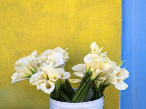Mexico, Xico. Calla lilies and colorful wall. by Jaynes Gallery