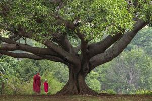 Myanmar, Pindaya. Buddhist Monks under Giant Banyan Tree by Jaynes Gallery