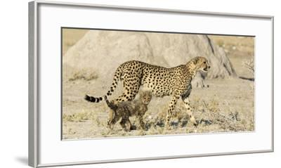 Namibia, Etosha National Park. Cheetah mother and cub.