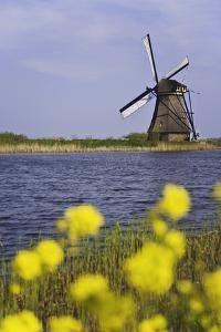Netherlands, Kinderdijk. Windmill and flowers next to canal. by Jaynes Gallery