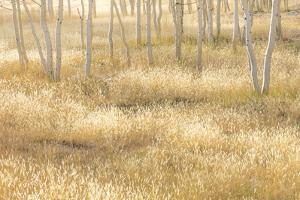 Nevada, Great Basin National Park. Grassy Meadow and Aspen Trees in Autumn by Jaynes Gallery