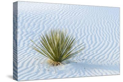 New Mexico, White Sands National Monument. Close-Up of Yucca and Sand Ripples