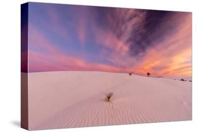 New Mexico, White Sands National Monument. Sunrise on Desert Sand