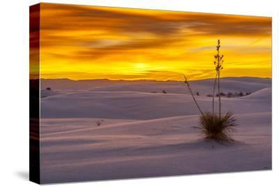 New Mexico, White Sands National Monument. Sunset on Desert and Yucca