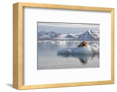 Norway, Svalbard. Bearded Seal Resting on Ice