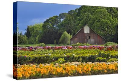 Old Barn and Flower Nursery, Willamette Valley, Oregon, USA