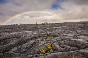 Rainbow over Old Lava Field, Hawaii Volcanoes NP, Hawaii, USA by Jaynes Gallery