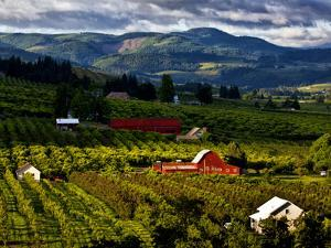 Red Barn Amid Orchards, Hood River, Oregon, USA by Jaynes Gallery