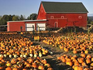 Red Barn and Pumpkin Display in Willamette Valley, Oregon, USA by Jaynes Gallery