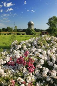 Silo and Wild Roses in Marion County, Oregon, USA by Jaynes Gallery