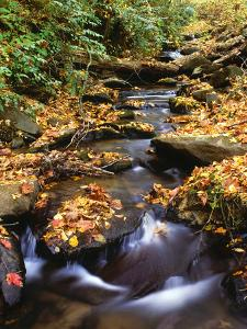 Small Creek in Autumn, Cherokee National Forest Georgia, USA by Jaynes Gallery