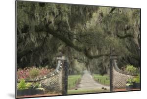South Carolina, Charleston. Entrance to Boone Hall Plantation by Jaynes Gallery