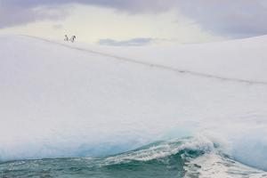 South Georgia Island. Chinstrap Penguins Ride an Iceberg by Jaynes Gallery