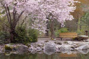 Spring Scenic in Lithia Park, Ashland, Oregon, USA by Jaynes Gallery