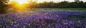 Sunrise in the hill country of Texas. by Jaynes Gallery