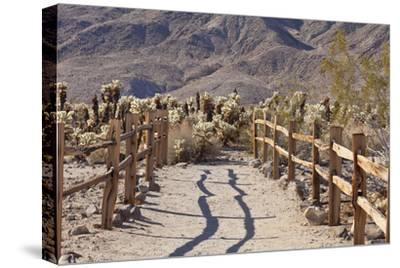 Trail into the Cholla Cactus Garden, Joshua Tree NP, California, USA