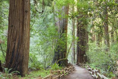 Trail Through Muir Woods National Monument, California, USA