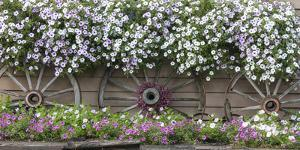 USA, Alaska, Chena Hot Springs. Flowers and wagon wheels. by Jaynes Gallery