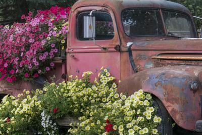 USA, Alaska, Chena Hot Springs. Old truck and flowers. by Jaynes Gallery