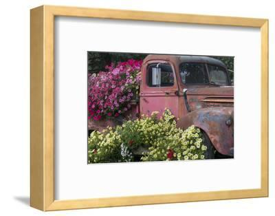 USA, Alaska, Chena Hot Springs. Old truck and flowers.