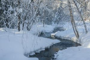 USA, Alaska, Fairbanks. Chena River in winter. by Jaynes Gallery