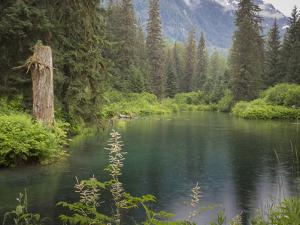 USA, Alaska, Tongass National Forest. Landscape with Beaver Pond on Fish Creek. by Jaynes Gallery