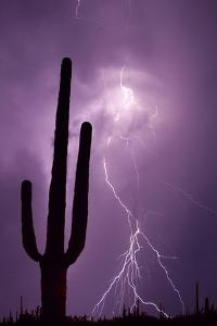 USA, Arizona. Composite of Saguaro Cactus and Lightning by Jaynes Gallery
