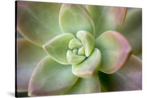 USA, Arizona. Detail of succulent plant. by Jaynes Gallery