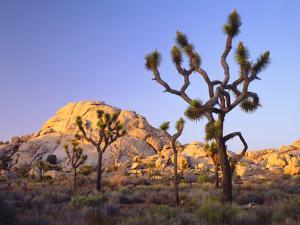 USA, California, Joshua Tree National Park by Jaynes Gallery
