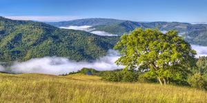 USA, California, Redwood National Park. Early morning fog in forest hills. California by Jaynes Gallery