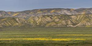 USA, California. Yellow wildflowers color plain and mountains. by Jaynes Gallery