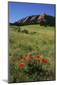 USA, Colorado, Boulder. Flatirons and Poppies at Chautauqua Park by Jaynes Gallery