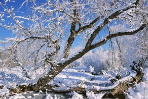 USA, Colorado, Boulder. Winter Scenic by Jaynes Gallery
