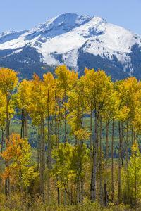 USA, Colorado. Fall Aspens and Mountain by Jaynes Gallery