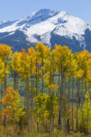 USA, Colorado. Fall Aspens and Mountain