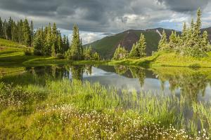 USA, Colorado, Gunnison National Forest. Paradise Divide and Pond Reflection by Jaynes Gallery