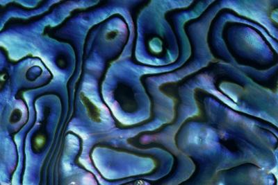 USA, Colorado, Lafayette. Abalone Shell Close Up by Jaynes Gallery