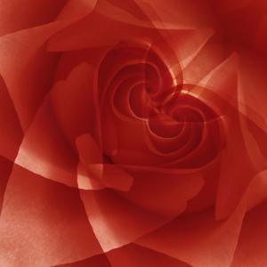 USA, Colorado, Lafayette. Red Rose Montage by Jaynes Gallery