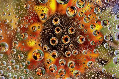 USA, Colorado, Lafayette. Water Bubbles on Glass Table Top by Jaynes Gallery