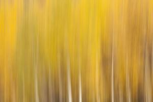 USA, Colorado, San Juan Mountains. Blur of autumn leaves in aspen trees. by Jaynes Gallery